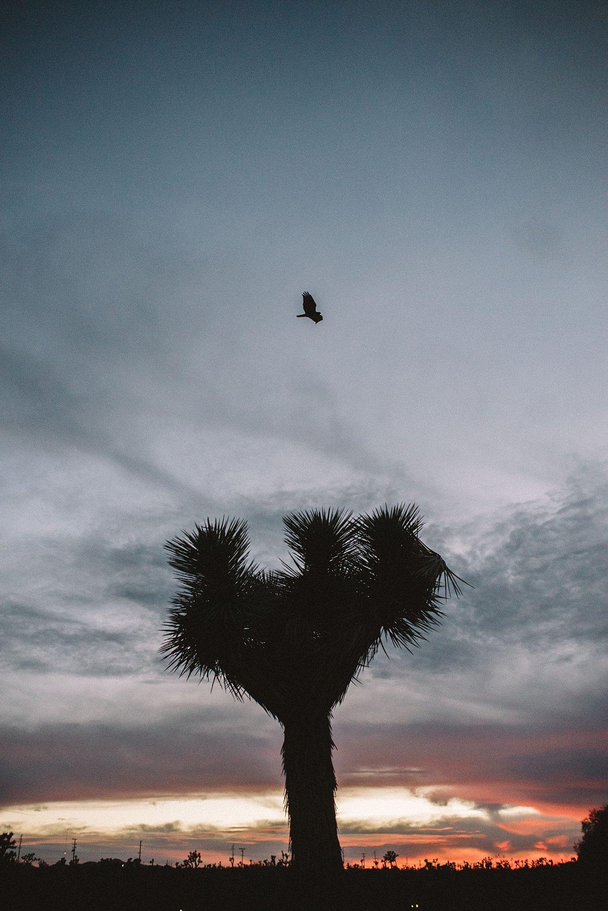 HYPC Joshua Tree_0064