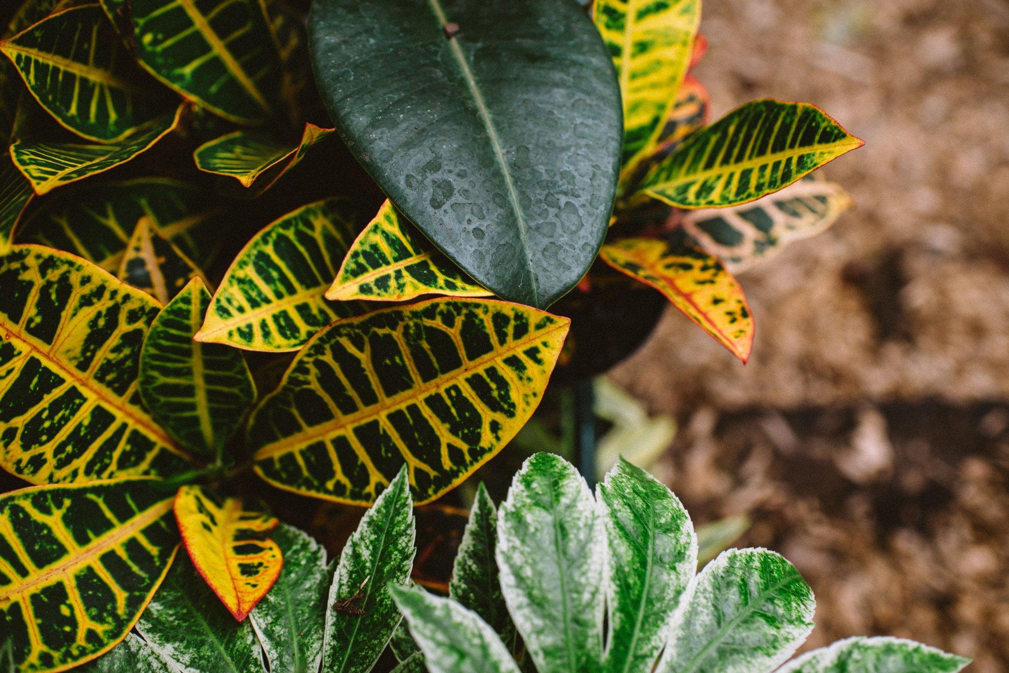 Plantify Content Creation